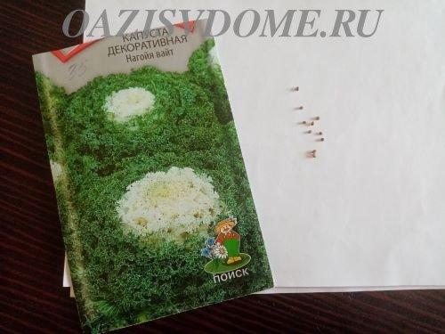 На фото семена декоративной капусты