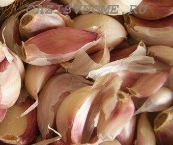 Посадка чеснока весной на Кубани: когда и как правильно сажать
