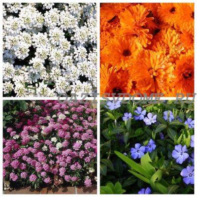 Какие цветы сажать в грунт в мае