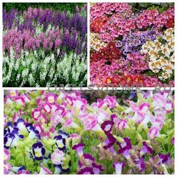 Необычные цветы, которые можно посеять на рассаду в феврале