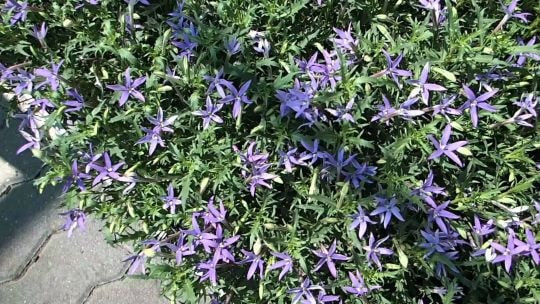 Лаурентия в саду
