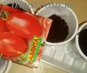 Подготовка семян томатов к посадке