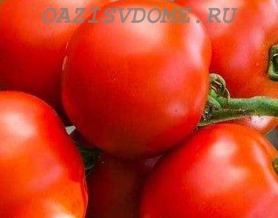 Когда сажать на рассаду низкорослые помидоры для открытого грунта и теплицы