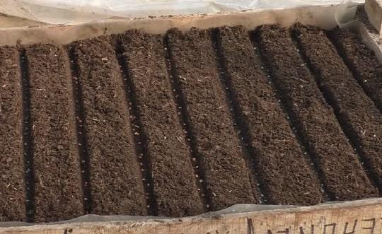 Подготовка к посеву батуна на рассаду