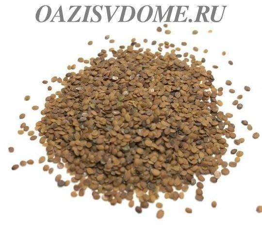 Семена алиссума