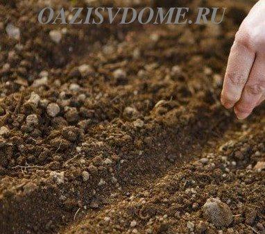 Посев семян в землю на грядке
