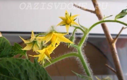 Мужской цветок огурца