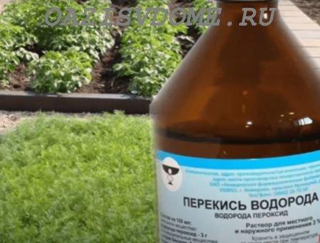 Когда, что и как поливать перекисью водорода в огороде и саду на даче