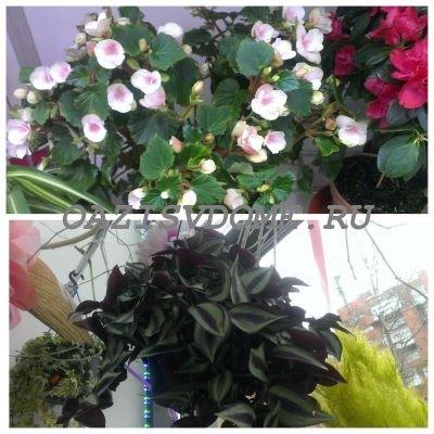 Подкормка цветов комнатных летом и весной