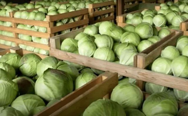 Хранение белокочанной капусты в ящиках