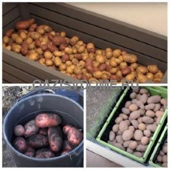 Способы хранения картошки зимой в домашних условиях