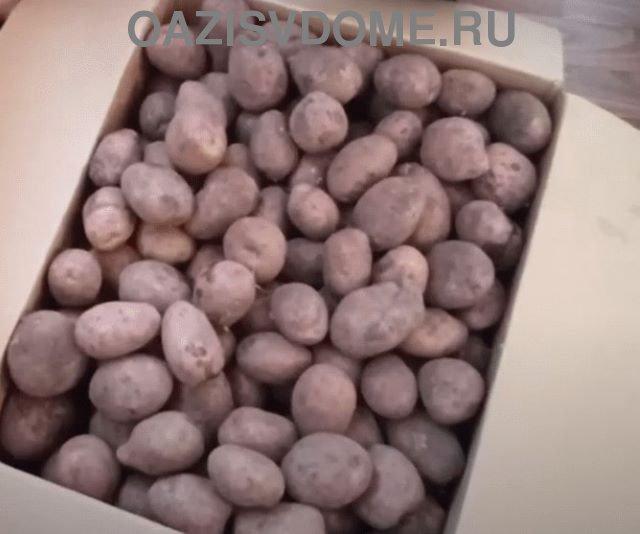 Хранение картошки в коробках
