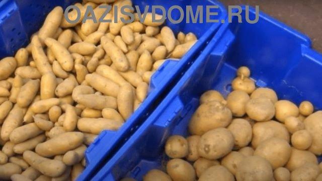 Зимнее хранение картошки
