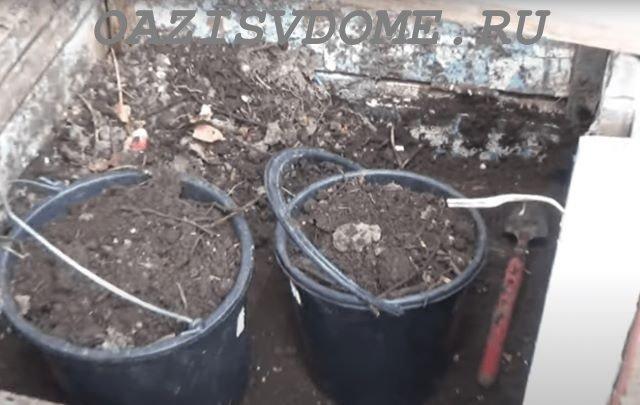 Готовый компост на даче