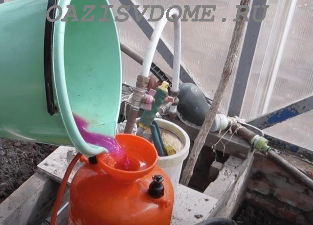 Раствор марганцовки для обработки почвы и теплицы