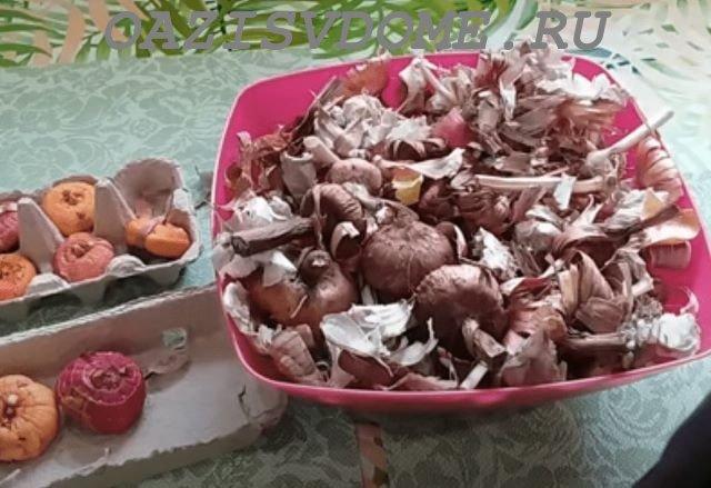 Очистка луковиц гладиолусов