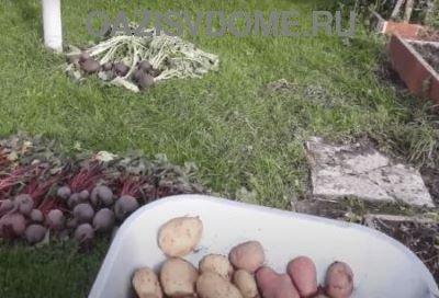 Лунный уборочный календарь на сентябрь 2021 года для уборки урожая