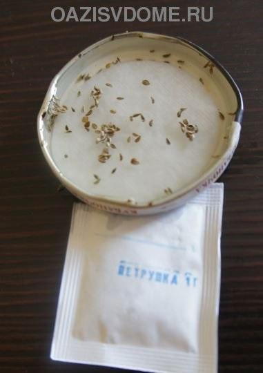 Предпосевное замачивание семян петрушки